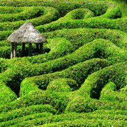Das verrückte Labyrinth - nützliche Infos zum für dich!